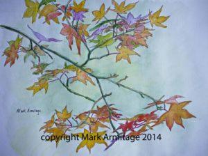 Acer autumnal colours by A R M I