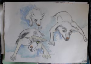 Arctic dogs by Ana Tewson-Bozic