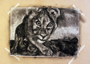 South African Lion by Lucy Harding