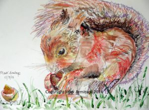 red squirrel by A R M I
