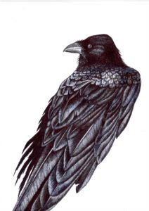 Raven by CLARE GRAVENELL