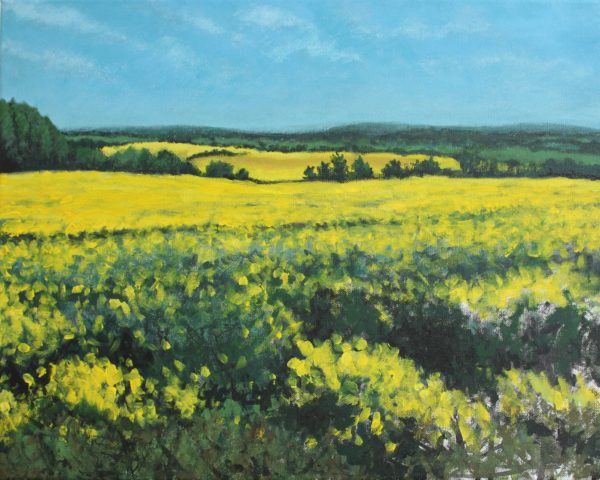 Rapeseed by CLARE GRAVENELL